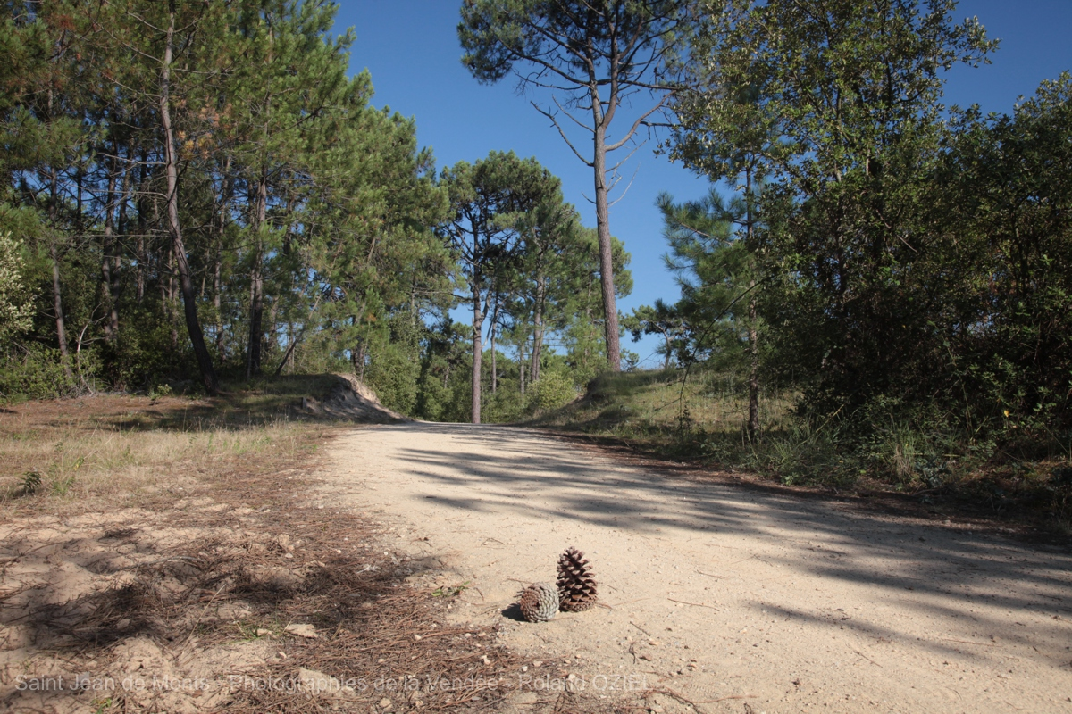 foret proche du camping